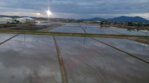 地元では、田んぼに水が張られ、田植えの準備が進んでいます。