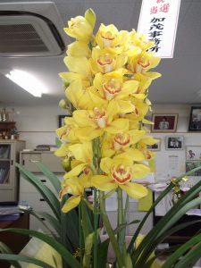 イメージカラーの黄色い蘭をお祝いに頂きました