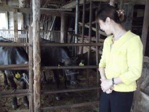 牛が近くに寄ってきました
