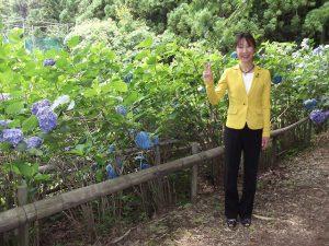 田上町護摩堂山には3万本の紫陽花が咲き誇っています