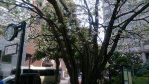 議員宿舎近くを散歩。春だなぁ♪