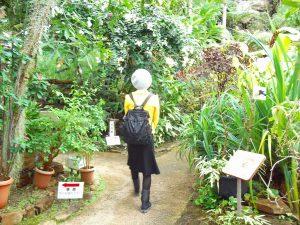 新潟県立植物園 クリスマス展